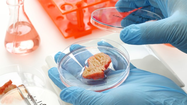 The future of food: What you need to know about cell-based meat
